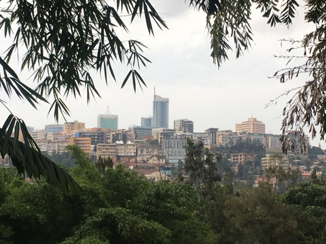 A view of the new skyscrapers of central Kigali, framed by the leaves of a weeping willow