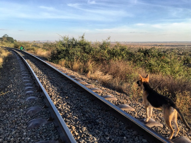 A dog stands on a railway line looking into the stan